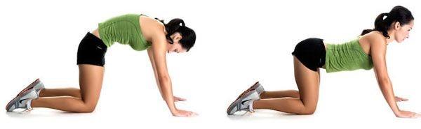 Картинки по запросу Упражнение кошечка для спины